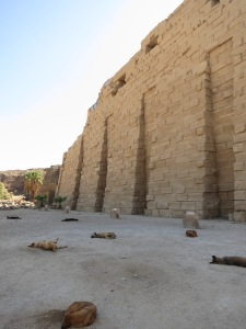 Lazy dogs sleeping out the heat of the day in the Temples of Karnak