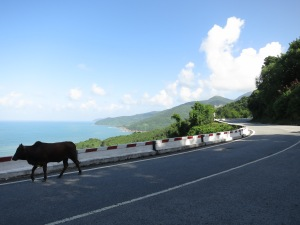 A cow goes for a stroll along the road as we approach the Hai Van Pass
