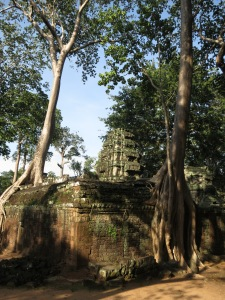 The beautiful colours of the trees and stone at Ta Prohm