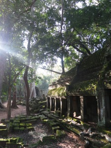 Mid-afternoon sunlight streaming through the invading jungle onto the moss-covered stones of Ta Prohm