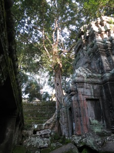 Jungle and history coexisting as a strangler fig spreads its roots across a temple building in Ta Prohm