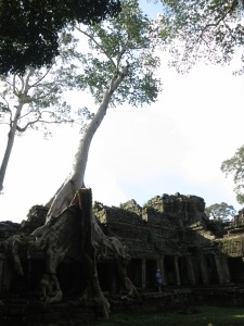 A huge strangler fig dominates a section of Preah Khan