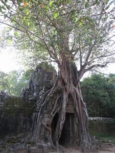 The iconic entrance to Ta Som, encased in strangler fig