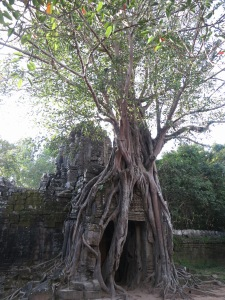 The iconic entrance to Ta Som, encased in strangler fig