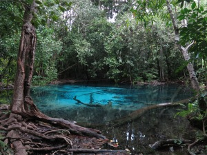The Blue Lagoon, in the Emerald Pool (Sra Morakot) near Krabi