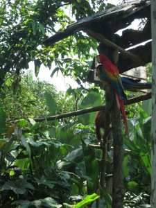 Brightly-coloured macaws and a monkey in Pilpintuwasi animal sanctuary