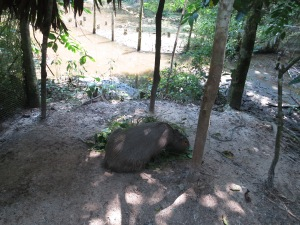 A giant rodent in Pilpintuwasi animal sanctuary