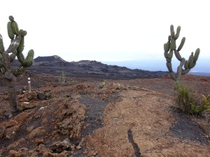 Volcanic rock and cacti