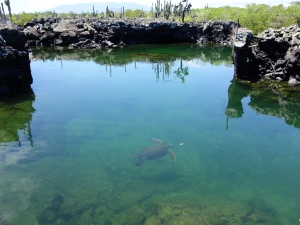 A sea turtle at Los Tuneles