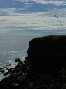 A frigatebird flies above the coastline of San Cristóbal