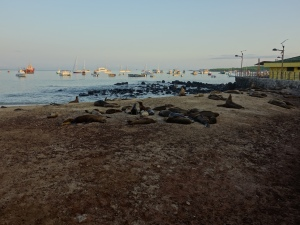 Sea lions on the beach in the early morning