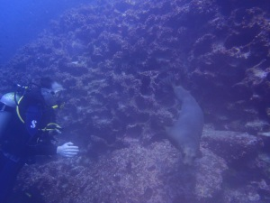 Chris says hi to a sea lion (photo courtesy of Eagleray Dives)