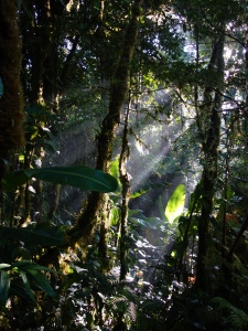 Sunlight streams through the steamy air between the trees Monteverde Cloud Forest Reserve