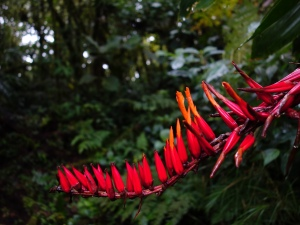 The natural beauty of Costa Rica:  in Monteverde Cloud Forest Reserve
