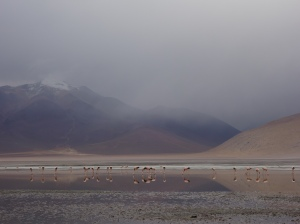Flamingos reflected standing in a lake in southern Bolivia