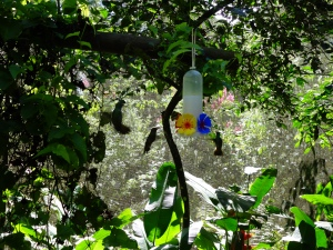 Hummingbirds in the Bird Park, feeding out of an artificial feeder